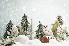 在森林横向射击雪结构树冬天之上 库存图片