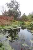 在森林死水的沈默 秋天在威克洛,爱尔兰 库存照片