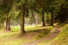 在森林池塘的秋天 免版税图库摄影