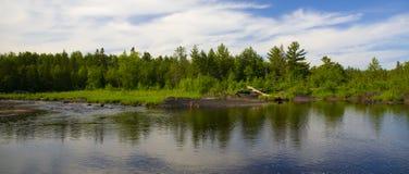 在森林河间 库存图片