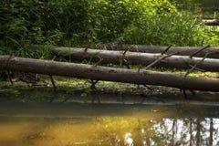 在森林沼泽的下落的树 库存照片