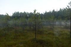 在森林沼泽的秋天阴暗有薄雾的早晨 免版税库存图片