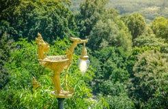 在森林泰国的金黄天鹅灯 免版税库存照片