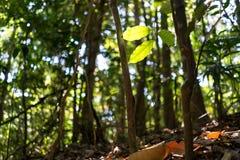 在森林温暖的绿色口气的叶子 免版税库存照片
