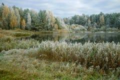 在森林湖的岸在10月霜普斯克夫地区,俄罗斯 库存图片