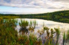 在森林湖的早晨 库存图片