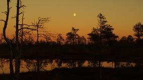 在森林湖的月亮上升 免版税库存图片
