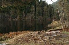 在森林湖的长凳 免版税库存图片
