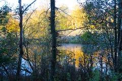 在森林湖的11月心情 免版税库存照片