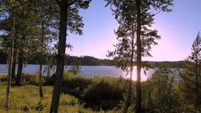 在森林湖视图的华美的日落 绿色树和植物在湖附近天空蔚蓝背景的 ?? 股票录像