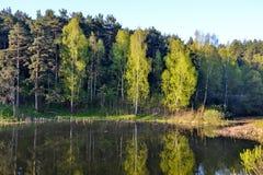 在森林湖附近的森林 夏天 在美丽的鸟云彩之上颜色及早飞行金子早晨本质宜人的平静的反映上升海运一些星期日 免版税库存照片