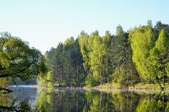 在森林湖附近的森林 夏天 在美丽的鸟云彩之上颜色及早飞行金子早晨本质宜人的平静的反映上升海运一些星期日 免版税库存图片
