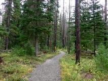 在森林火灾以后的树 免版税库存照片
