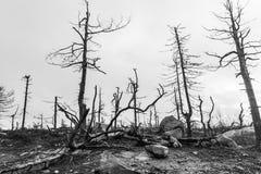 在森林火灾以后 黑色白色 免版税库存照片