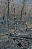 在森林火灾14以后 免版税库存照片