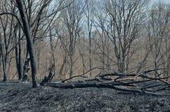 在森林火灾13以后 免版税库存图片
