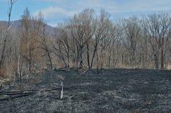 在森林火灾18以后 库存图片
