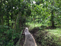 在森林的一串足迹在Jogja,印度尼西亚 库存图片
