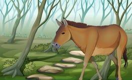 在森林的一匹马 免版税库存图片