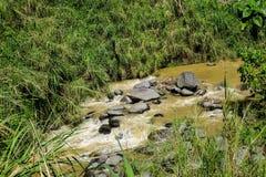 在森林的一条小河在Jogja,印度尼西亚 免版税库存图片