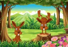 在森林的两只兔子 库存例证