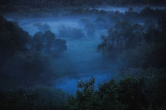 在森林的冷雾在月光的晚上 库存图片