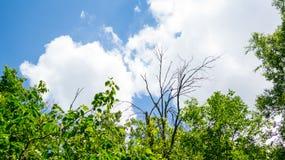 在森林的多云天空 免版税库存照片