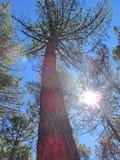 在森林的天空透视 免版税库存照片