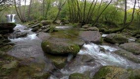 在森林的好的小小河在西班牙在一阴天 股票视频