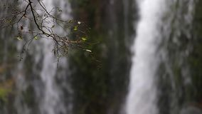 在森林的好的瀑布细节在西班牙在一阴天 股票视频