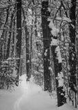 在森林的孑然路 免版税库存图片