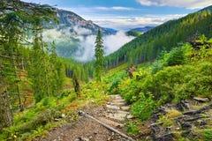 在森林的山行迹Tatra山,喀尔巴汗 免版税库存图片