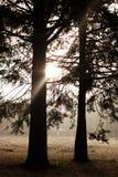 在森林的日出 免版税库存照片