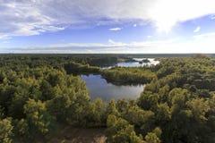 在森林的日落在自然公园叫Lommeles撒哈拉大沙漠在比利时 免版税图库摄影