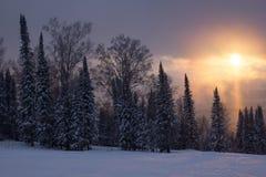 在森林的日落 库存图片