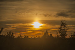 在森林的日落 免版税库存照片