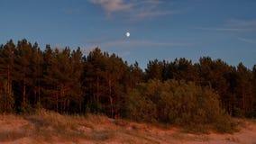 在森林的月亮上升 免版税库存图片