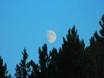 在森林的月亮 免版税库存图片