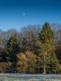 在森林的月亮 免版税库存照片