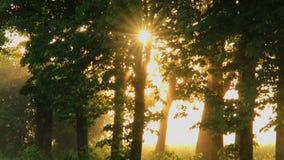 在森林的有薄雾的黎明有第一阳光的 股票视频