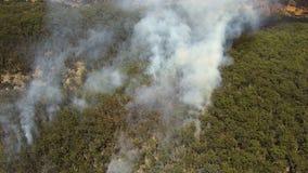 在森林的火焰有得到的烟的浇灌 股票录像