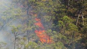 在森林的火焰有得到的烟的浇灌 影视素材
