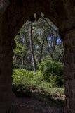 在森林的看法通过墙壁 图库摄影