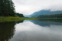 在森林的神秘的雾在湖后 库存图片