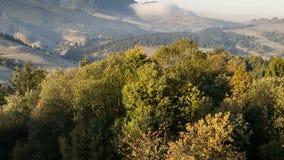 在森林的秋天日出有快速落的从树时间间隔离开 股票录像
