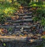 在森林的秋天步 免版税图库摄影