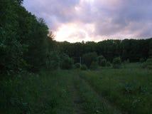 在森林的紫罗兰色日落 免版税库存图片