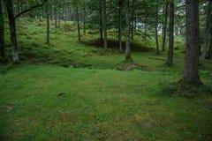 在森林的绿色上升 免版税库存照片
