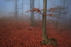 在森林的蓝色雾的偏僻的树 库存照片