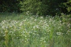 在森林的边缘的夏天领域 库存照片